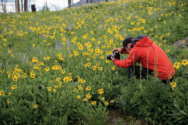 Beartooth Highway | Montana Wildflowers