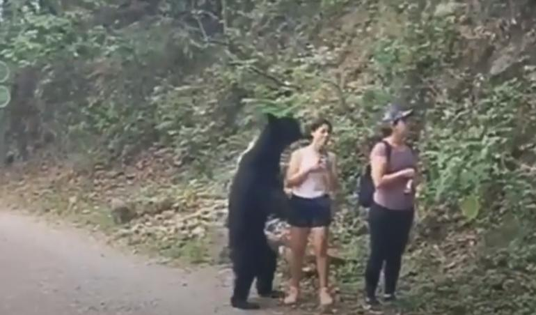 Black bear approaches hikers