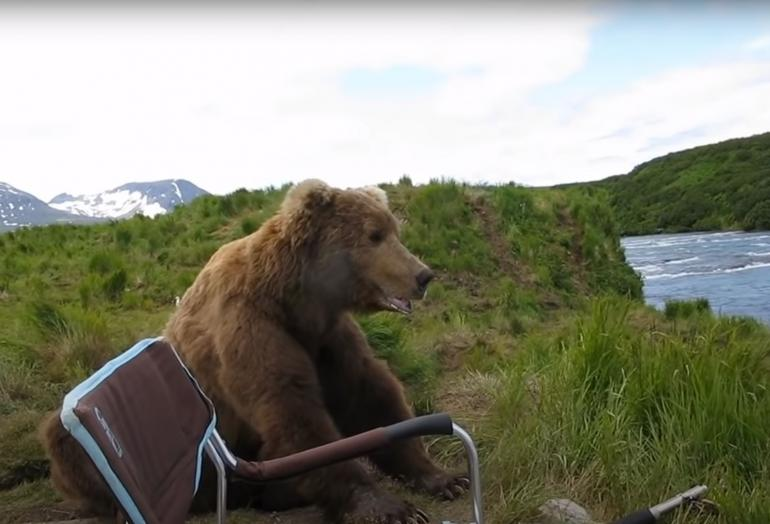 Grizzly next to chair