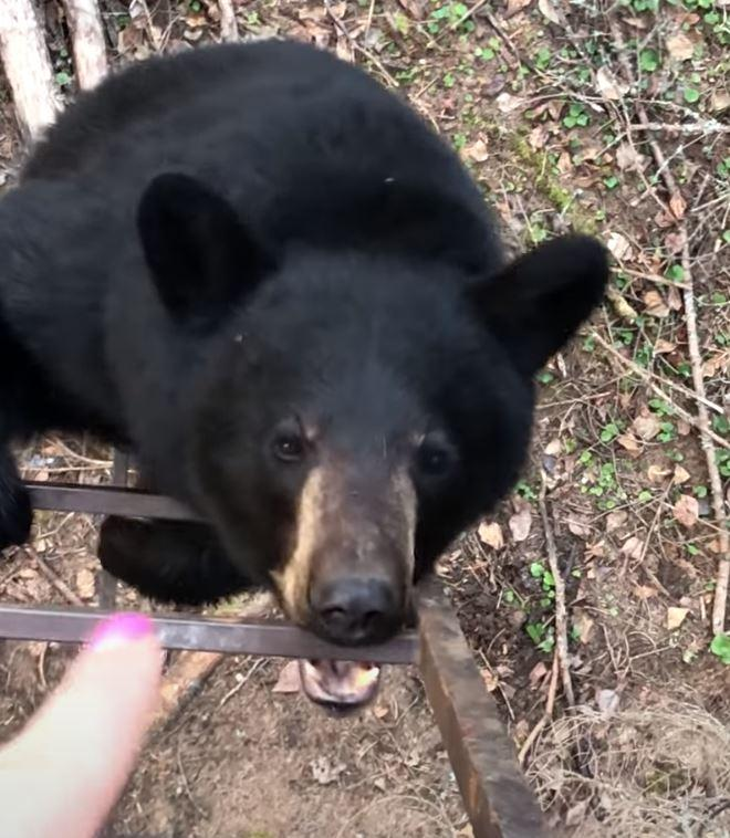 Finger-wagging at Bear