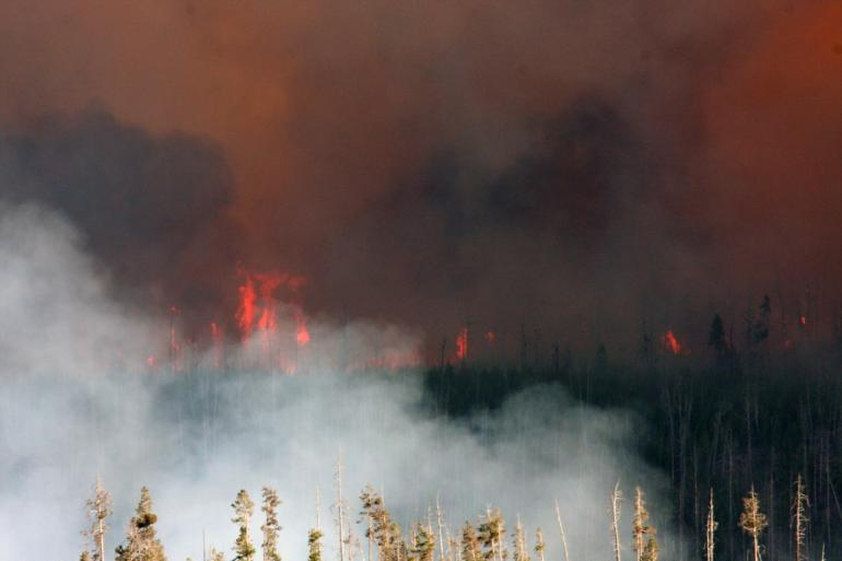 Forest Fire At Yellowstone