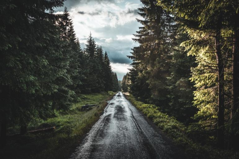 Moody road through forest