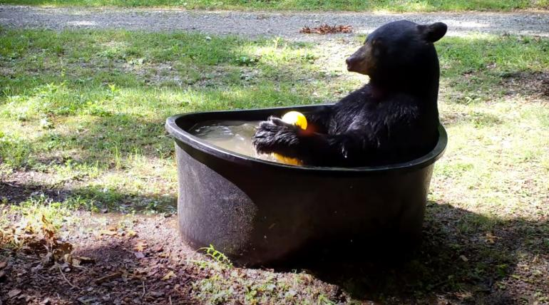 Bear with rubber ducky