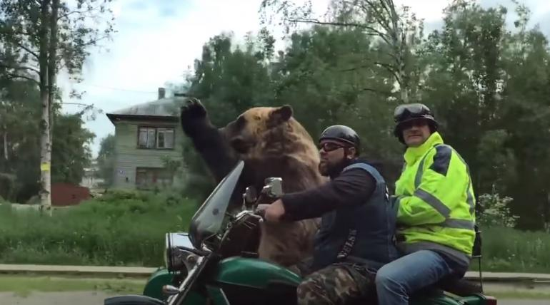 Russian bear riding motorcycle