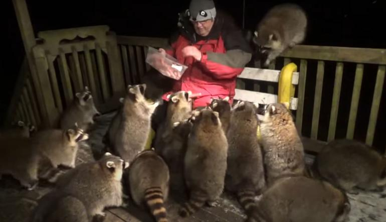 Raccoon Whisperer