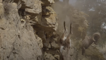 Goat falling off of cliff
