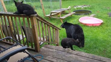 Backyard bears have picnic