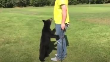 Bear cub sizing up golfer