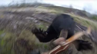 Bear attack on camera