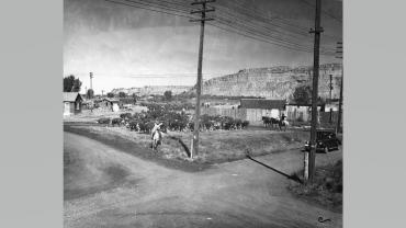 Cattle drive at South 27th Street and 10th Avenue, circa 1939.