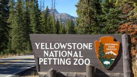 Yellowstone National Petting Zoo