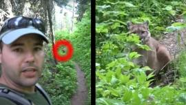 Hiker vs. Mountain Lion at Glacier National Park