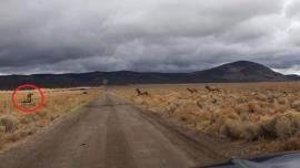 Elk breaks neck