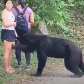 Bear approaching Mexican woman
