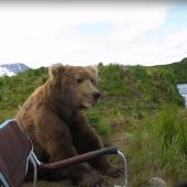 Grizzly sitting next to chair