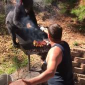 Barbecue battle with bear