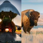 Bison/plane collage