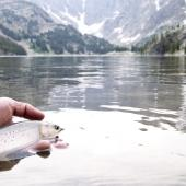 Fishing on the beartooth