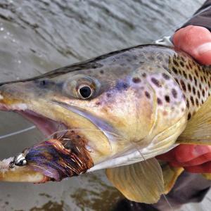 Articles distinctly montana magazine for Do fish feel pain